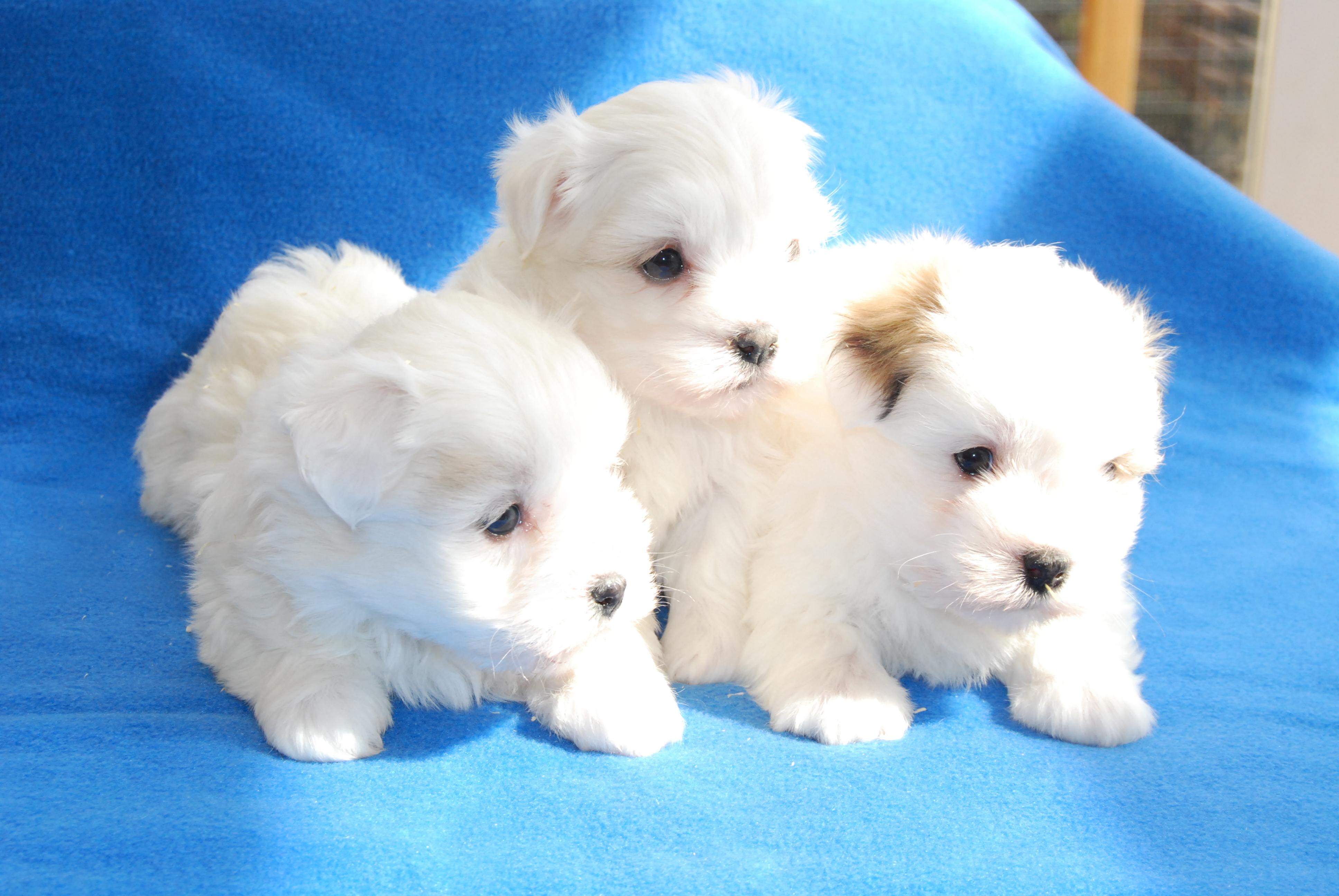 Nuevas fotos de los cachorros