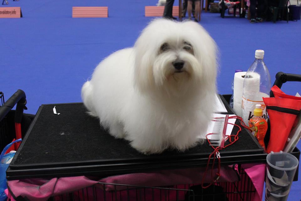Nationale dog Show Klatovy