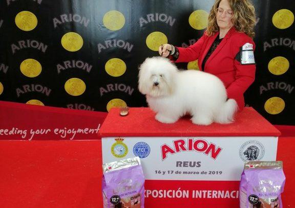 XXIII Exposición Internacional Canina de Reus 2019